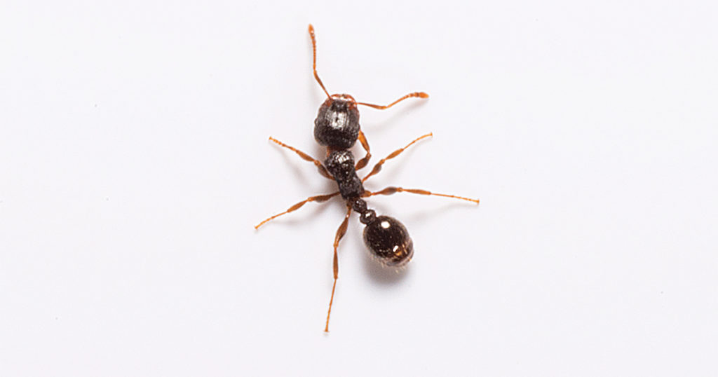 Signs pests have infested commercial facilities.