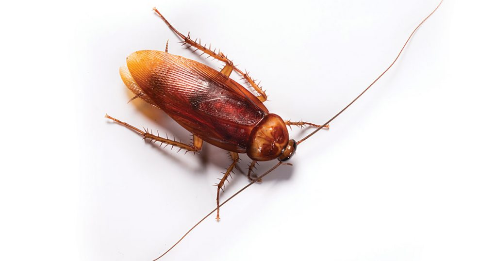 Cockroaches are capable of spreading 33 kinds of bacteria, but a proper prevention plan will help keep your home healthy.