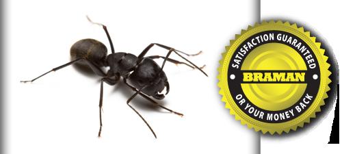 Conquering  Carpenter Ants