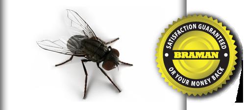 Fruit Fly Infestation