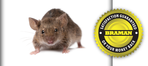 Top 5 Reasons you <br>Don't Want Mice in Your Home