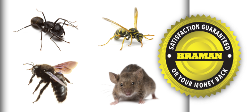 Pest Prevention <br>The MultiPest Plan