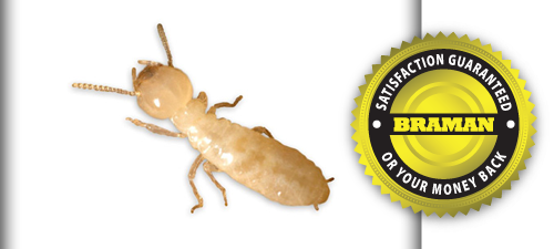 Termite Inspection & Treatment