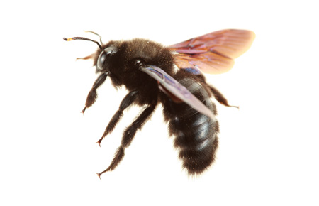 Buzz Off Averting Bees &  Wasps