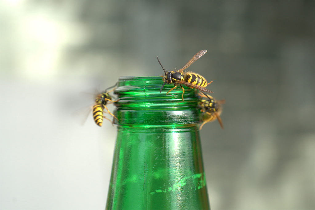 Stinging Bugs and Business: Wasps on a Bottle